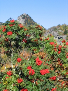 Grandfather Mountain_0001